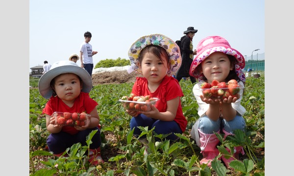 アクトインディ株式会社(いこーよ)の収穫からはじまる3歳からのいちごジャム&パンづくり in 狭山市イベント
