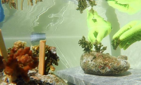 10月10日(日)サンゴの植樹体験をしてみよう ~伊豆の海の環境を考える~ イベント画像1