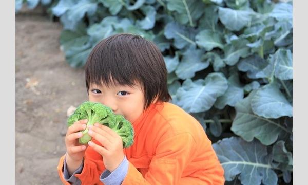 植えて・育てて・食べる!子供の心を豊かにする植育イベント@オンライン イベント画像2