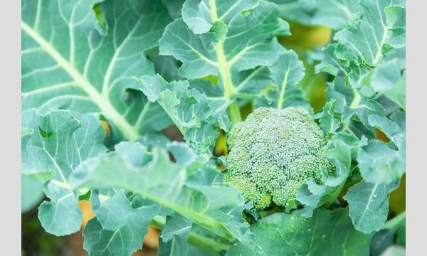 植えて・育てて・食べる!子供の心を豊かにする植育イベント@オンライン イベント画像3