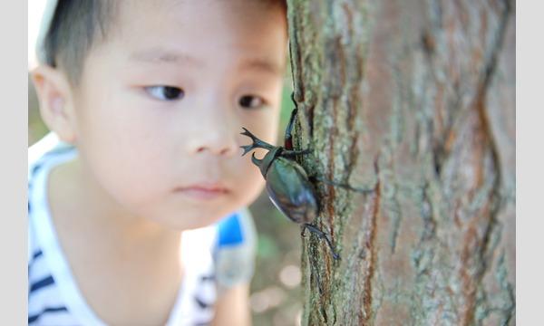 アクトインディ株式会社(いこーよ)の3歳からのはじめてのカブトムシさがし in 狭山イベント