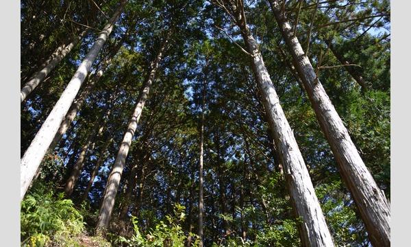 森林のお仕事に挑戦しょう!本気の木こり体験! in 飯能市 イベント画像1