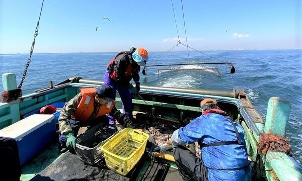 アクトインディ株式会社(いこーよ)の9月12日(日)漁師のお仕事体験をしよう!@千葉県イベント