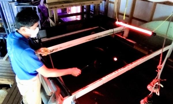 10月24日(日)水族館の深海魚をPRしよう!@静岡県 イベント画像3