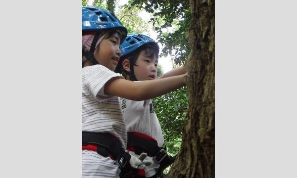 7歳からの本格木登り!ツリークライミング&森林学習 in 狭山市 イベント画像2