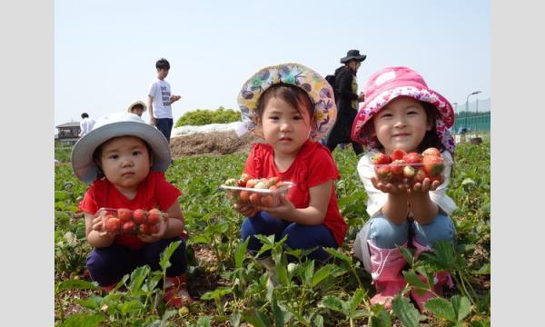 収穫から挑戦!5歳からのいちごジャム作り&イチゴ屋さん体験in狭山 イベント画像1