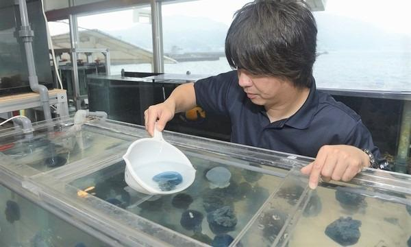 11月13日(土)海の手配師・石垣幸二さんのお仕事@静岡県 イベント画像3