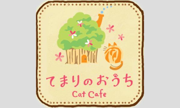 猫カフェ×セクマイ~貸し切りオフ会~ イベント画像1