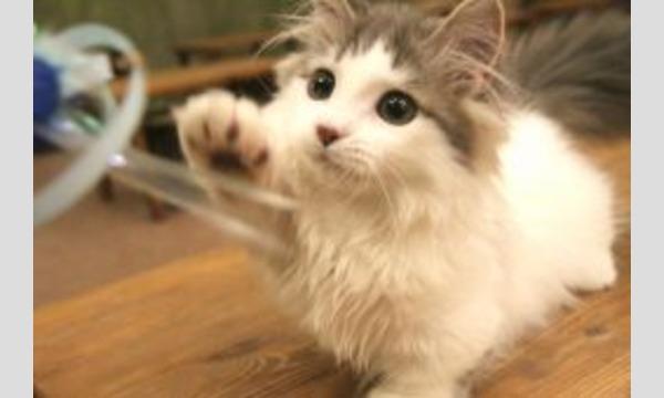 猫カフェ×セクマイ~貸し切りオフ会~ イベント画像3