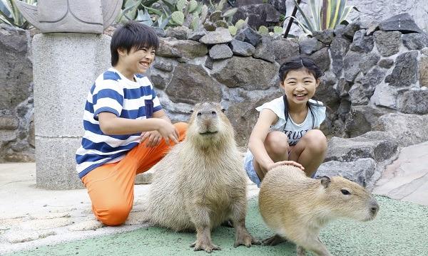 伊豆シャボテン動物公園【距離感ゼロのふれあい動物園】 イベント画像2