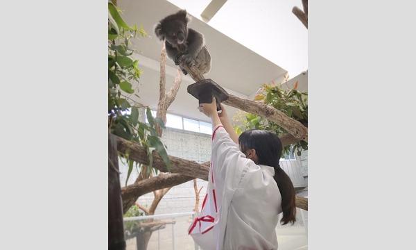 11/30(月)【整理券】合格祈願 運がつく!コアラのお守り 令和2年11月30日 イベント画像2