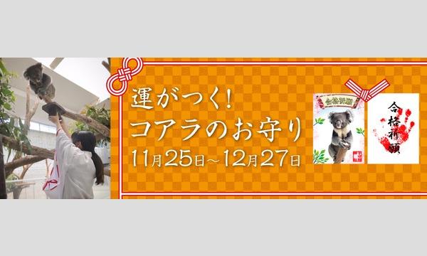 12/7(月)【整理券】合格祈願 運がつく!コアラのお守り 令和2年12月7日 イベント画像1