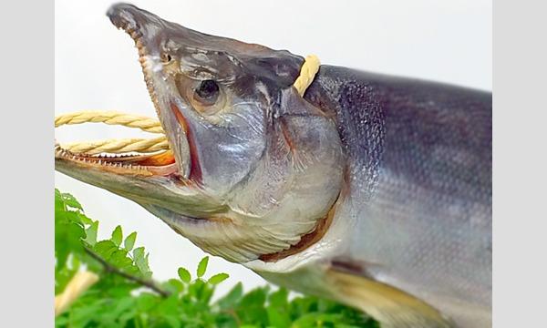 塩で熟成する『鮭を極める 』 @築地魚河岸スタジオ「築技セミナー」 イベント画像1