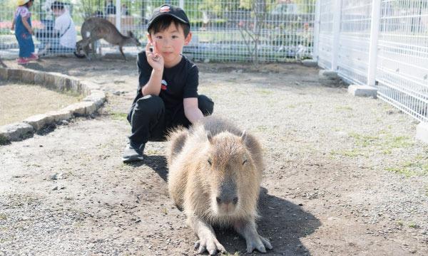 滋賀農業公園 ブルーメの丘 入園券 イベント画像2