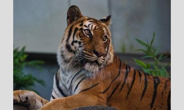 いしかわ動物園 ナイトズー2020 入園予約申込/8月開催分 イベント画像3