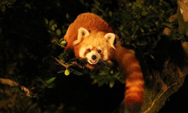 いしかわ動物園 ナイトズー2021 入園予約申込/9月25、26日開催分 イベント画像3