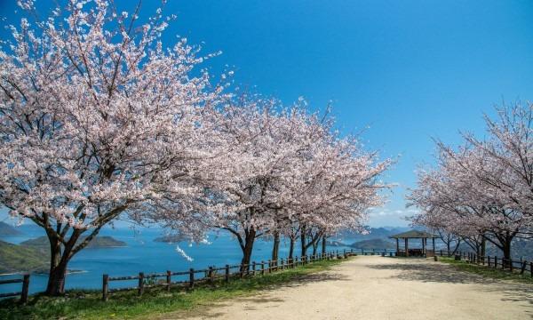【4/1(木)】紫雲出山桜シーズン マイカー入山チケット イベント画像2
