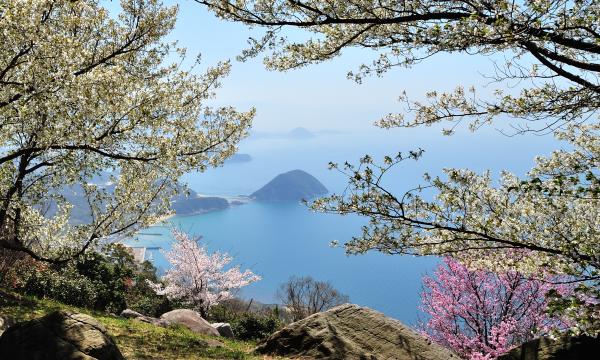 【4/4(日)】紫雲出山桜シーズン マイカー入山チケット イベント画像3