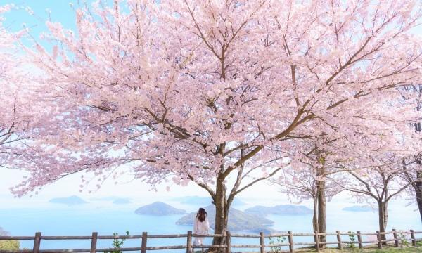 桜終了につきイベント中止【4/7(水)】紫雲出山桜シーズン マイカー入山チケット イベント画像1
