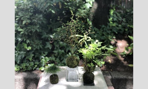 苔玉教室-夏の暮らしと苔玉- イベント画像1