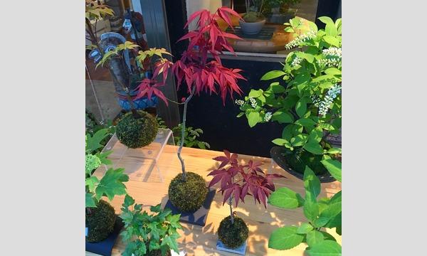 盆栽教室‐日本の暮らしと盆栽‐ イベント画像1