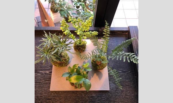 盆栽教室‐日本の暮らしと盆栽‐ イベント画像2