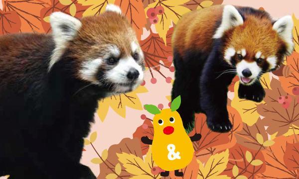 【9月20日(月)入園分】東山動植物園入園予約