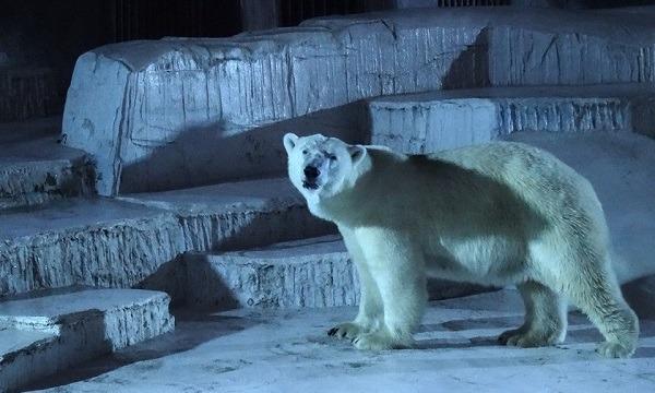夜の動物を覗き見!天王寺動物園ナイトZOOチケット付き宿泊プラン イベント画像1