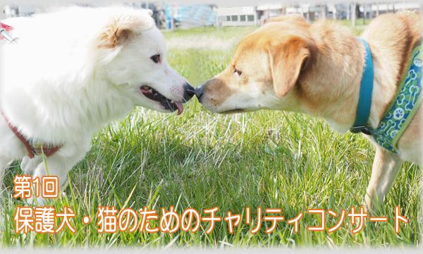 第1回 保護犬・猫のためのチャリティーコンサート イベント画像1