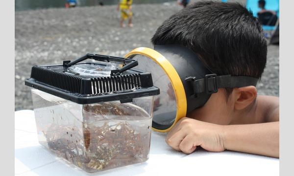 〜知遊食を体感!!僕たちのウォーターパーク〜朝獲れ!浦富定置網の小魚調査 イベント画像1