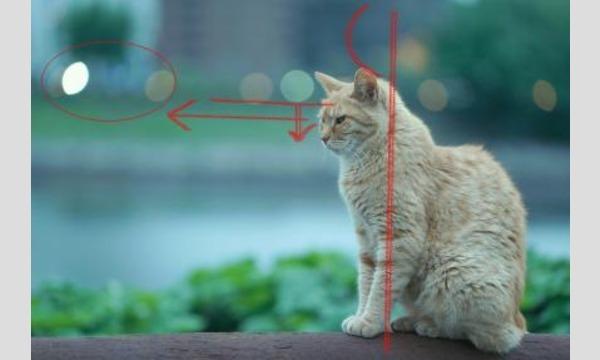 BUKATSUDOの【全6回連続講座/金曜】すずちゃんのカメラ講座 ~もっと写真がうまくなりたい!作品講評会~イベント