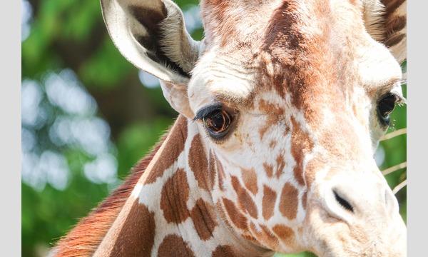 すずちゃんのカメラ講座 〜新緑の遠足・動物園で写真の基本を攻略!~ in神奈川イベント