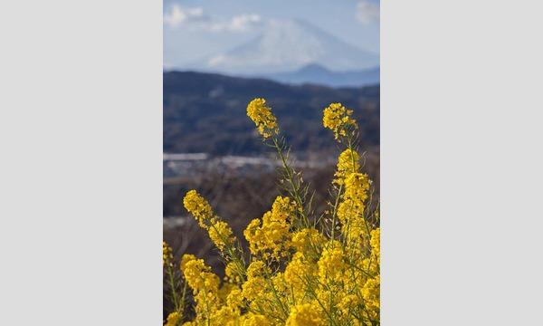 すずちゃんのカメラ講座 ~二宮・吾妻山の菜の花&冬の梅沢海岸~