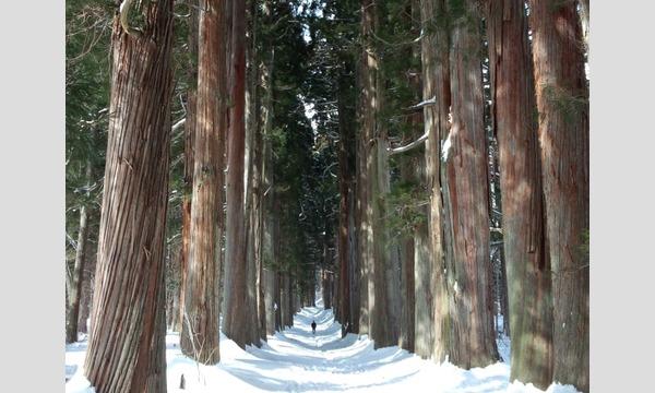 【ガイドツアー】雪の戸隠神社「奥社」の森でスノーシューハイク ~神の森で心をほぐす~