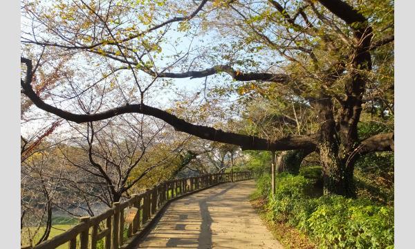 10月24日(日)四谷撮影会|コットン撮影会