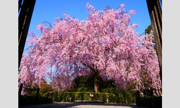 妙心寺退蔵院  昼食付き特別拝観1 Day Tour1 4/13(木) イベント画像1