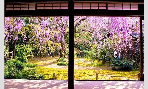 妙心寺退蔵院  昼食付き特別拝観 4/5(金) イベント画像3