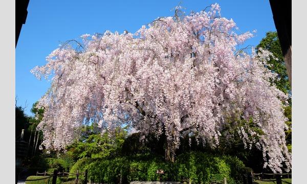 妙心寺退蔵院  昼食付き特別拝観2 Day Tour2 4/5(水) in京イベント