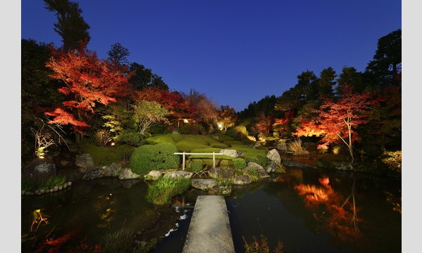 妙心寺退蔵院 夜間特別拝観1 Night Illuminations Tour1  12/3(日) in京イベント