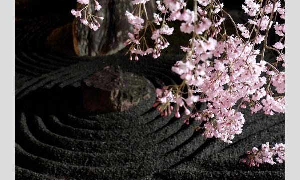 妙心寺退蔵院 夜間特別拝観2 Night Illuminations Tour2  4/4(火) イベント画像3