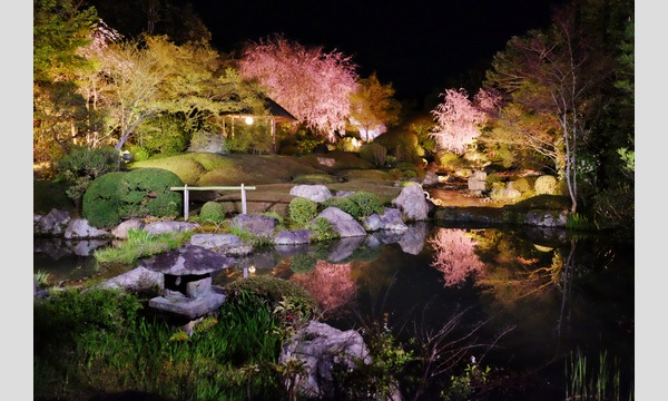 妙心寺退蔵院 夜間特別拝観1 Night Illuminations Tour1  4/16(日) イベント画像1
