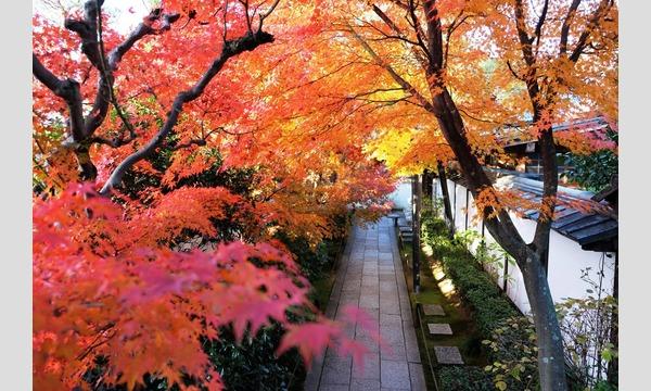 妙心寺退蔵院  昼食付き特別拝観2 Day Tour2 11/18(土) イベント画像2
