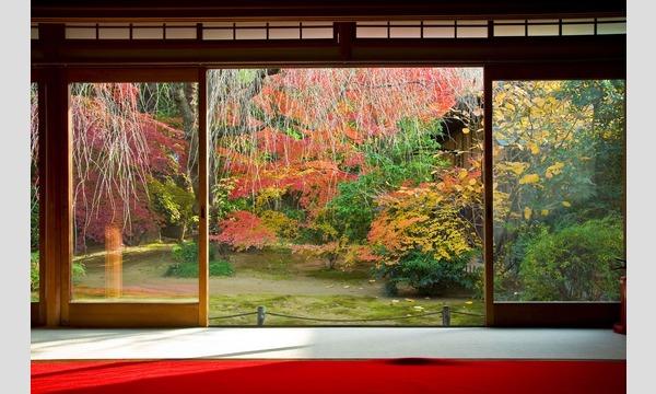 妙心寺退蔵院「観楓会」昼食プラン イベント画像2