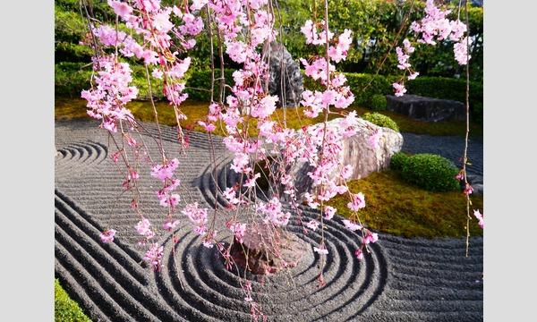 妙心寺退蔵院  昼食付き特別拝観1 Day Tour1 4/3(月) イベント画像3