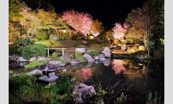 Nozomi Co., Ltd. / 株式会社のぞみ の妙心寺退蔵院 夜間特別拝観2 4/1(日)イベント