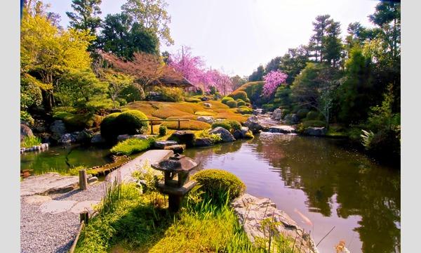 妙心寺退蔵院  昼食付き特別拝観2 Day Tour2 4/10(月) イベント画像3