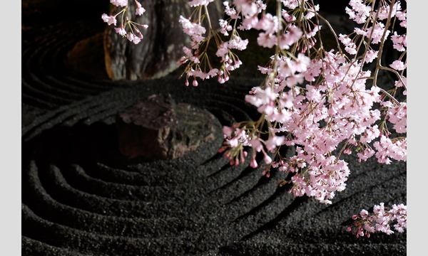 妙心寺退蔵院 夜間特別拝観2 Night Illuminations Tour2  4/3(月) イベント画像3