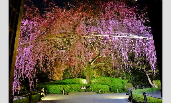 妙心寺退蔵院 夜間特別拝観 4/10(水) イベント画像3