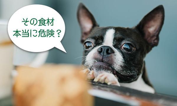 犬・猫のための「NG食材講座」<宮城県仙台市> イベント画像2