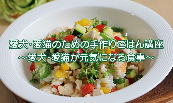 犬・猫のための健康手作りごはん講座<宮城県仙台市> イベント画像3